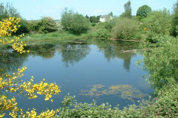 mirfield waters 015