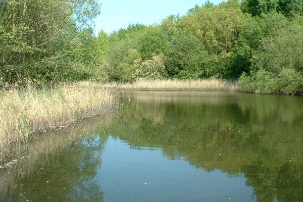mirfield waters 2 003